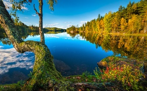 Picture autumn, forest, lake, reflection, tree, Norway, Norway, Buskerud, Buskerud, Hurum, Free, Sætre
