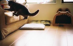 Picture cat, cat, room, sofa, floor, jumping