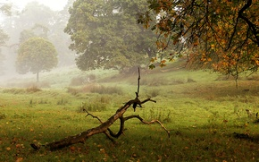 Picture autumn, trees, fog, Park, snag