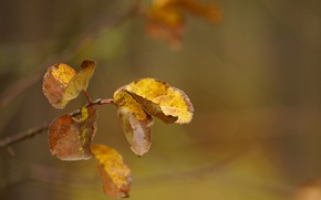 Picture Nature, Autumn, Leaves