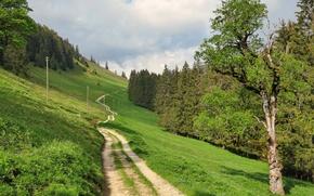 Picture Switzerland, nature, road, landscape, grass, Fribourg