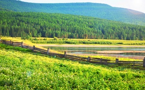 Picture forest, summer, grass, trees, river, the fence, Village, potatoes, Verkhnemarkovo