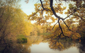 Picture lake, yellow, trees, branches, autumn, forest, leaves