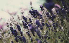 Picture flowers, nature, background, Wallpaper, plants, flowering