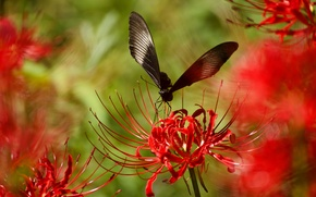 Picture flower, plant, wings, petals, insect