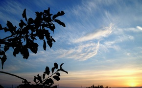 Picture the sky, color, Sunset, branch