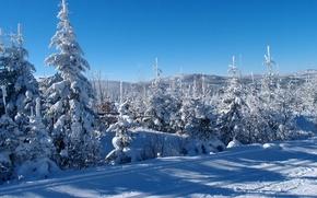 Picture snow, trees, Czech Republic, winter landscape, Sumava