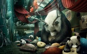 Picture bike, room, pillow, horns, Panda, desktopography