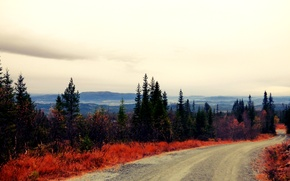 Picture road, autumn, forest, Norway
