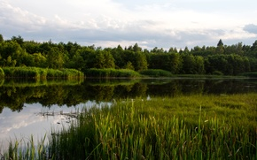 Picture forest, water, lake, river, reed