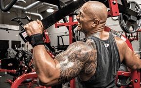 Picture machine, Dwayne Johnson, the rock, workout, gym