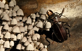 Picture Wood, Beetle, Fungus