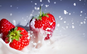 Picture macro, squirt, cream, strawberry