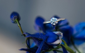 Wallpaper flowers, blue, petals, ring, stone, wedding