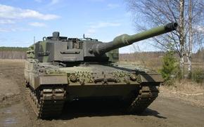 Wallpaper leopard, birch, tank