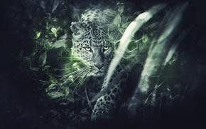 Picture Leopard, Leopard, FuriousGFX
