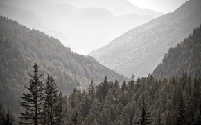 Picture trees, landscape, mountains