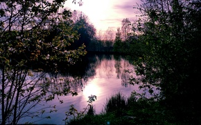 Picture forest, Nature, landscape
