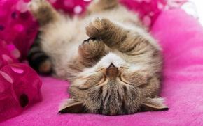 Picture sleep, kitty, sleeping kitten, sleep
