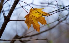 Picture autumn, macro, sheet, yellow, branch