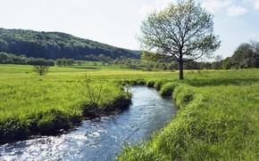 Picture summer, grass, stream, Field