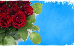 Picture red, sky, blue, roses