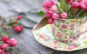 Wallpaper flowers, background, Cup