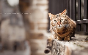 Picture cat, background, street