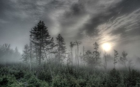Wallpaper fog, the sun, trees, forest