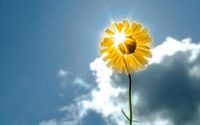 Picture flower, the sky, the sun, flowers, background, widescreen, Wallpaper, sunflower, wallpaper, flower, widescreen, background, sun, …