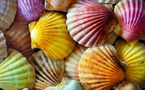 Picture macro, texture, shell, colorful