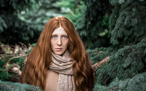 Picture forest, fright, Christmas trees, needles, the red-haired girl, Nimfa
