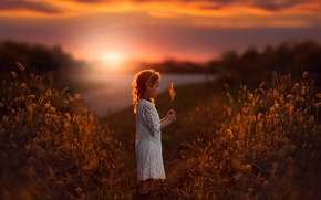Picture field, sunset, girl, a blade of grass