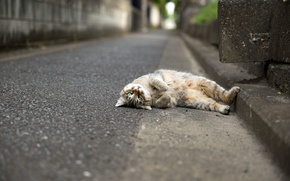 Picture cat, look, animal, lying
