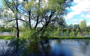Picture water, background, Wallpaper, spring, River, willow, Siberia