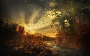 Picture birds, stream, stones, treatment