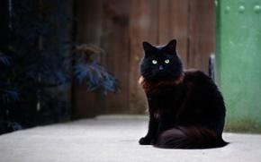 Picture cat, cat, black, fluffy