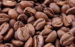 Picture Macro, Grain, Coffee