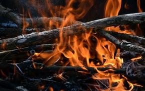 Picture fire, the fire, firewood