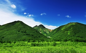 Picture greens, the sky, grass, trees, mountains, nature