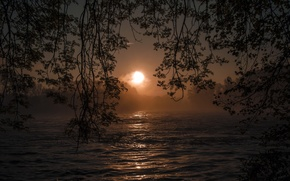 Picture trees, night, branches, river