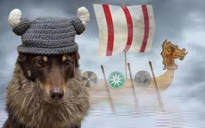Picture hat, ship, sailboat, dog, computer design