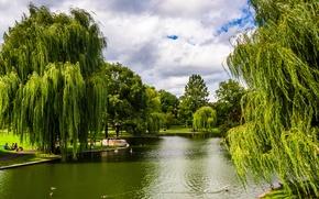 Wallpaper Park, greens, trees, Boston, Massachusetts, pond, USA