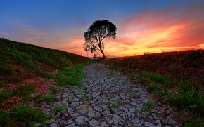 Picture the sky, grass, sunset, cracked, tree, the ground