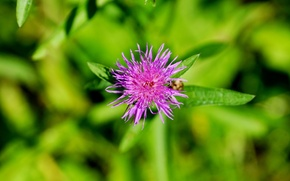Picture nature, background, minimalism, plants, Flower, green
