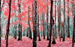Picture autumn, forest, leaves, trees, foliage