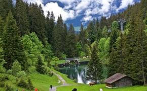 Wallpaper cows, valley, grass, path, Grindelwald, pond, trees, lift, Grindelwald, forest, clouds, height, greens, slope, mountains, ...