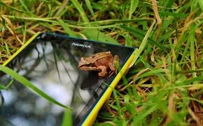 Picture macro, frog, phone, Nokia