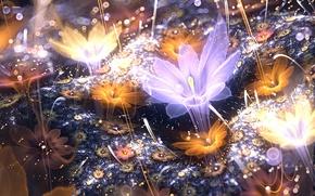 Picture flower, light, petals