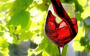 Picture leaves, wine, red, glass, grapes, poured
